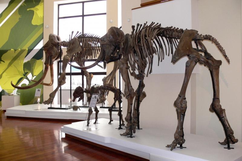 Музеј природе и човека