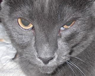 котешки водни очи