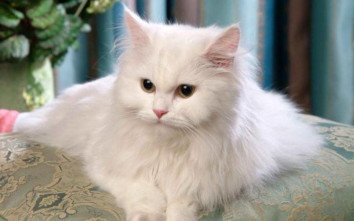 Vrlo uske fotografije maca