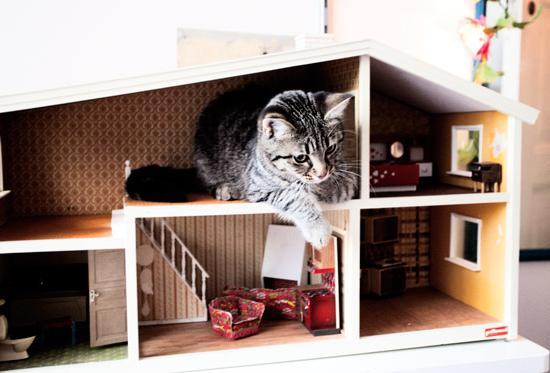 casa per gatti fai da te