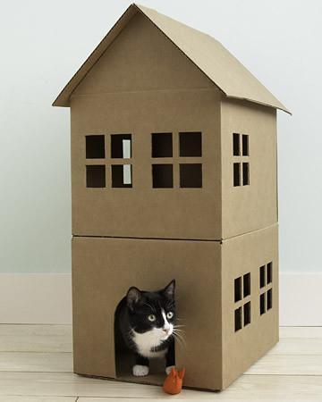 casa per gatto fai da te fuori dalla scatola