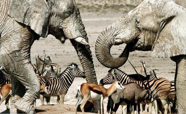 popolazione animale