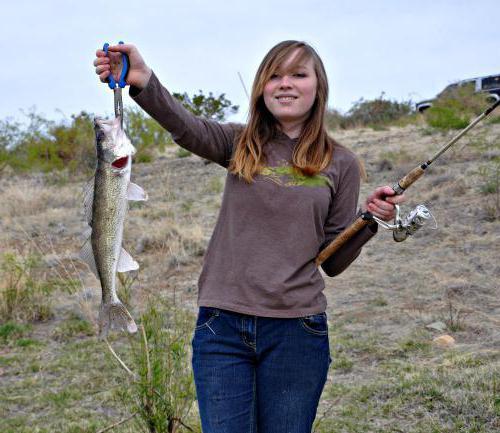Активаторът раздробява Fishhungry или не преразглежда