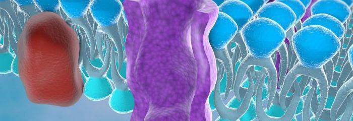 adenomiosi e endometriosi qual è la differenza di trattamento