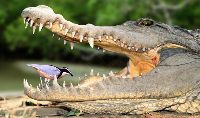 животни от средиземноморската природна зона Африка