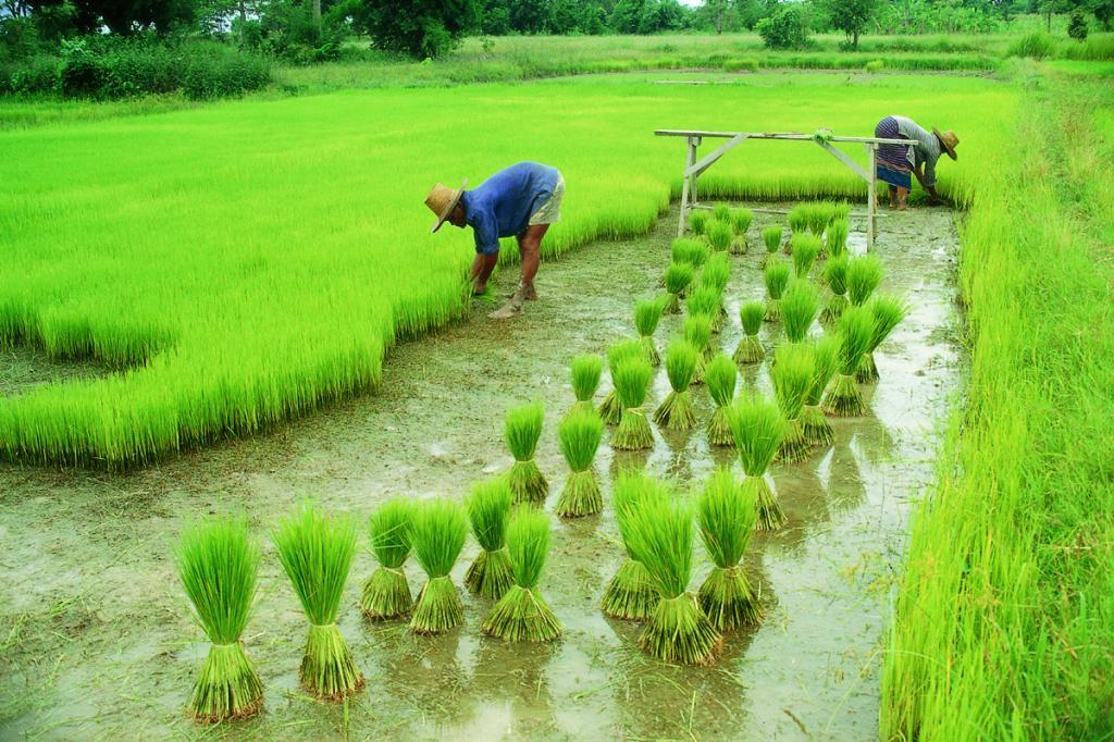 uso del suolo agricolo