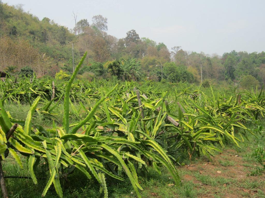 tipi di terreni agricoli di uso consentito