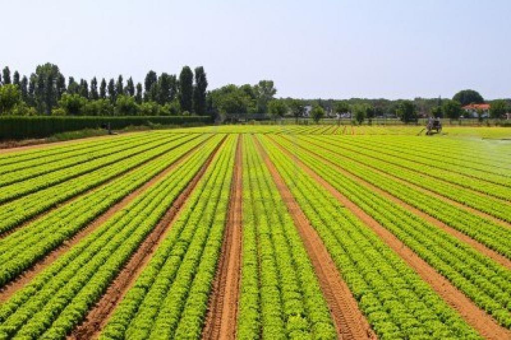categorie di terreni agricoli
