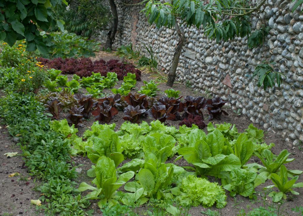 Vrtne biljke
