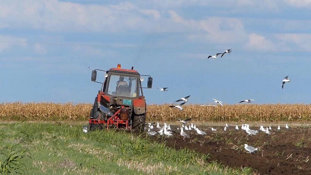 ptice na polju