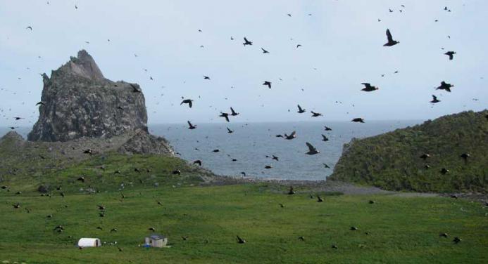 Кой е открил Алеутските острови