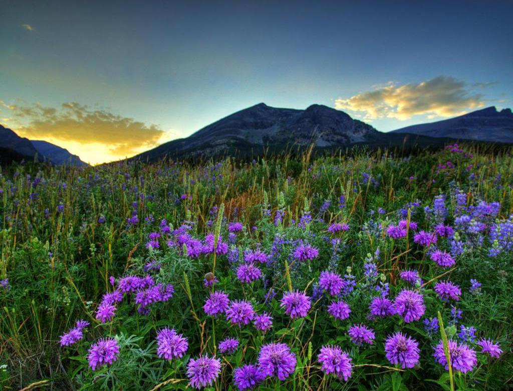 Lato górska łąka