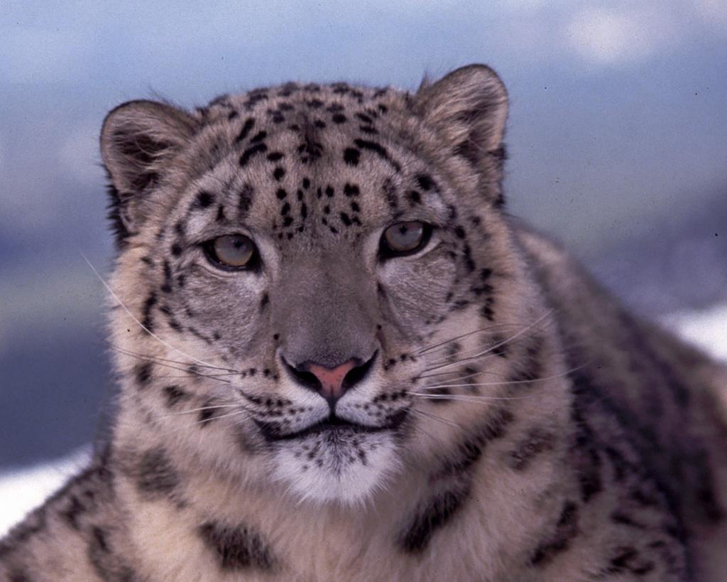 Rezervat životinjskog svijeta