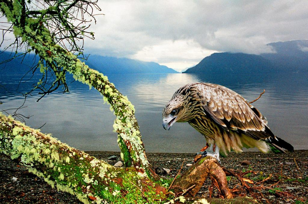 Ptice iz rezervata