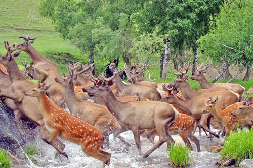 Predstavnici faune Altaja