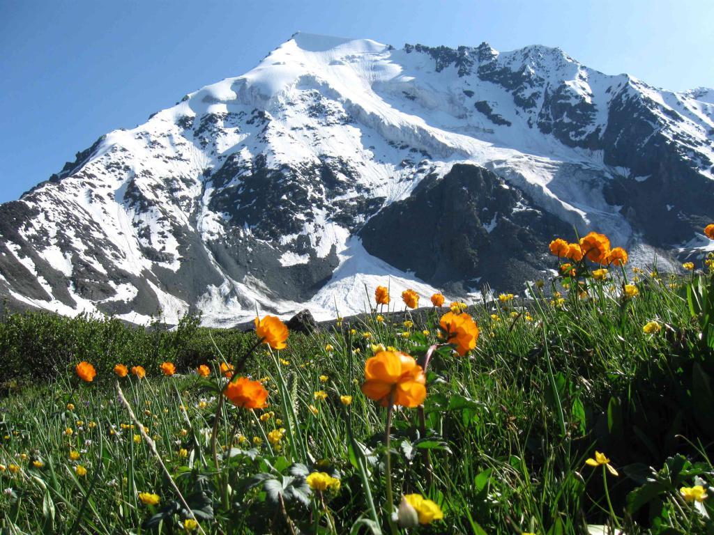 Alpske livade