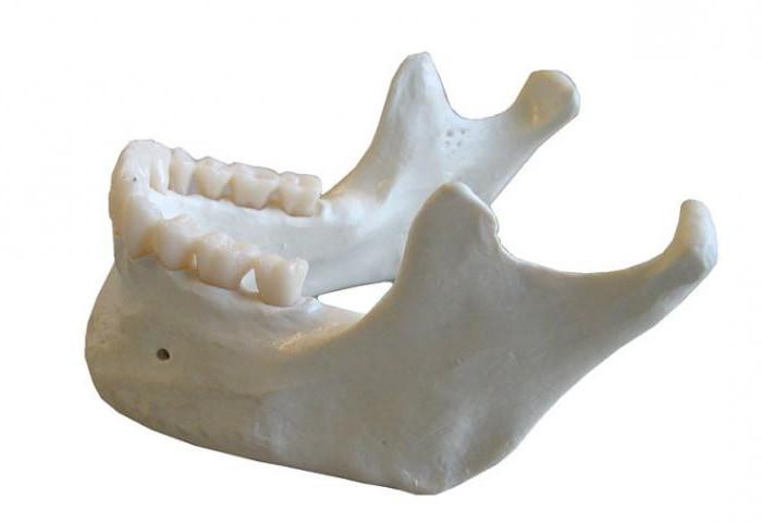 anatomia kości wyrostka zębodołowego