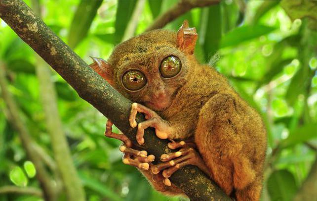 incredibili animali del nostro pianeta