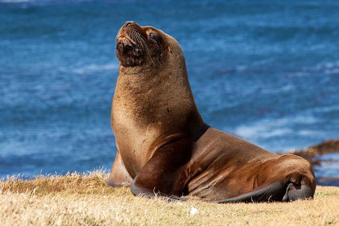 incredibili animali marini