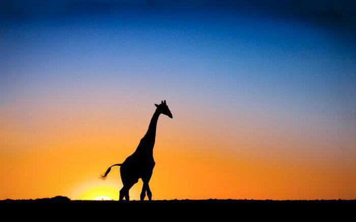 анализ на стихотворение жираф гумильов
