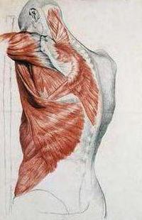 anatomia degli esercizi di forza per gli uomini