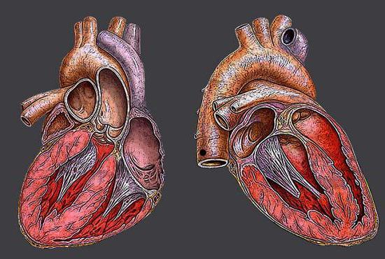 Il lavoro del cuore.