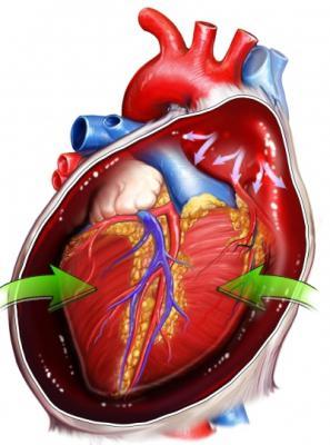 Anatomia del cuore umano.
