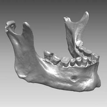 anatomia della mascella inferiore umana