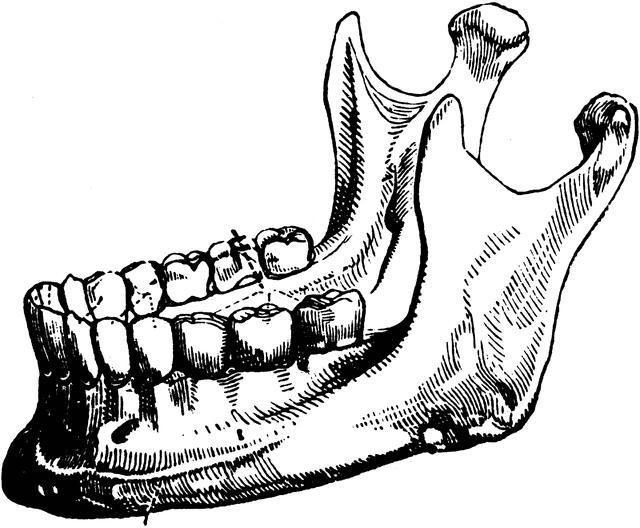 anatomia della mascella inferiore