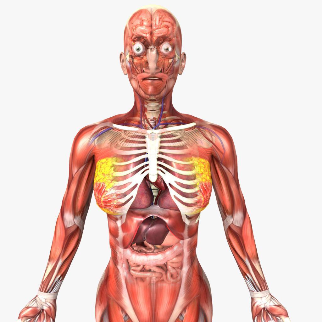 Анатомија људског тела