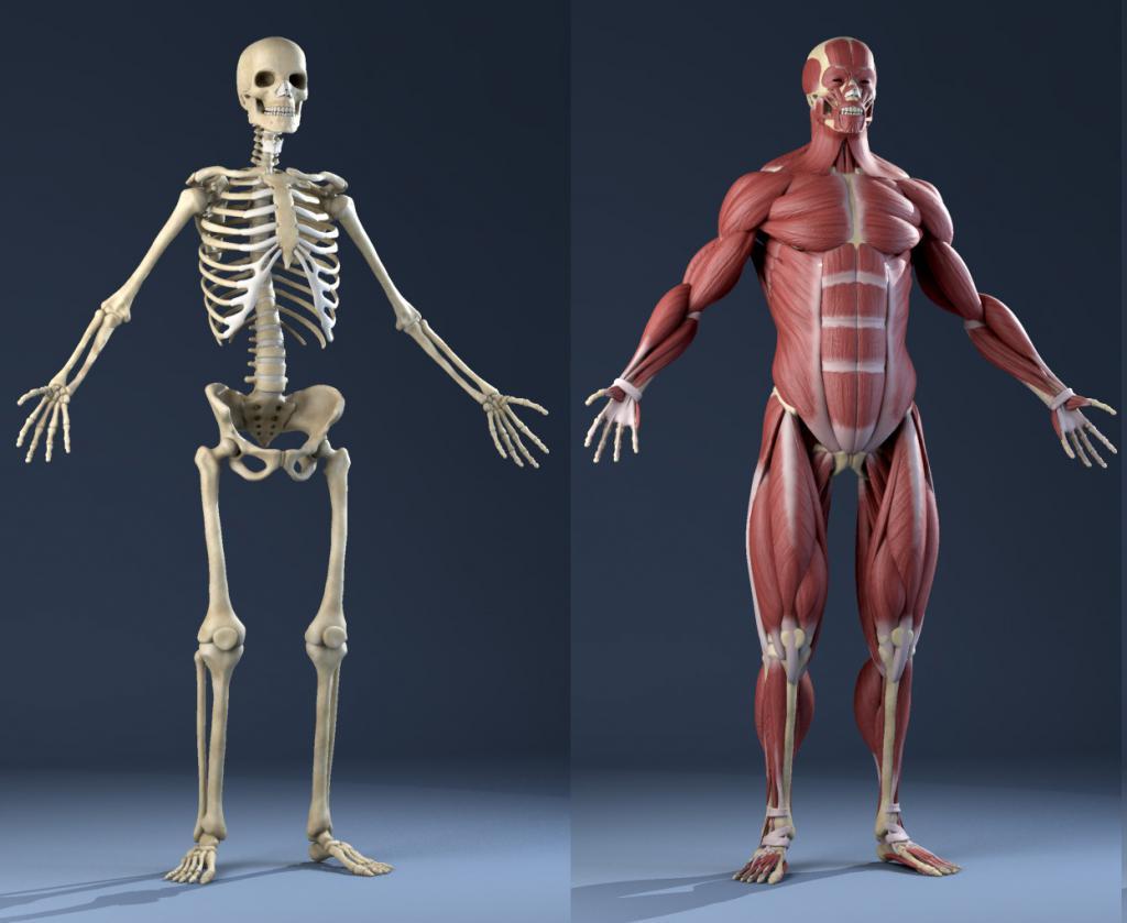 Хуман скелетон