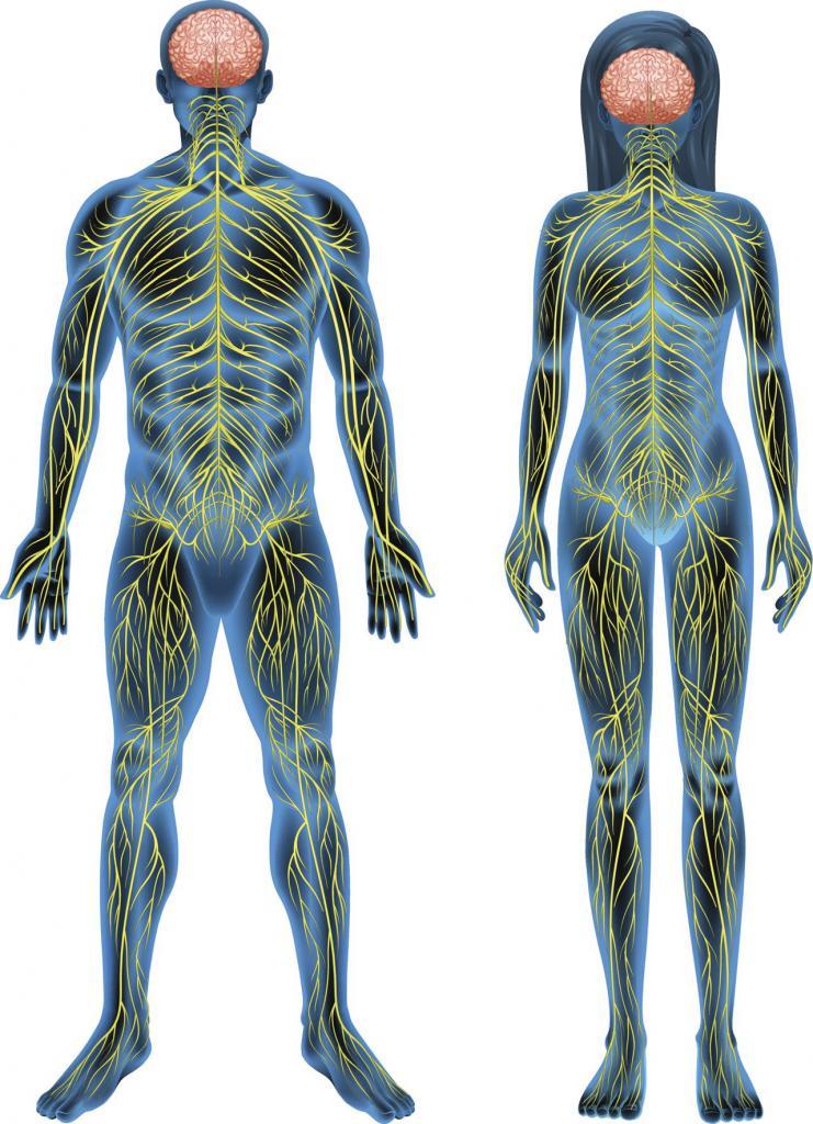 Нервни систем
