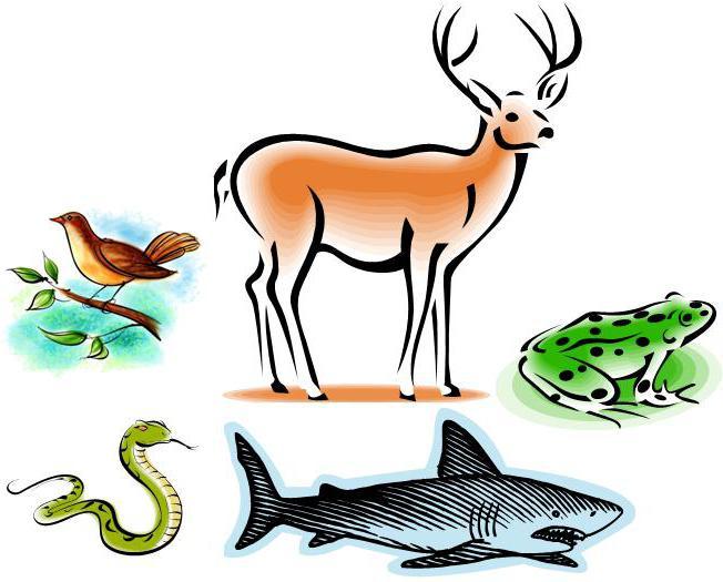 класификација животињских врста