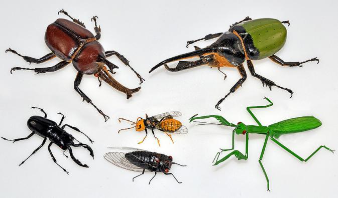 класификација животињског света