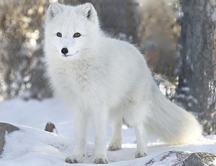 mjesta za upoznavanje lisica