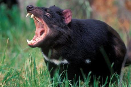 опасни животни в Австралия