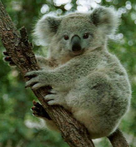 Най-опасните животни в Австралия