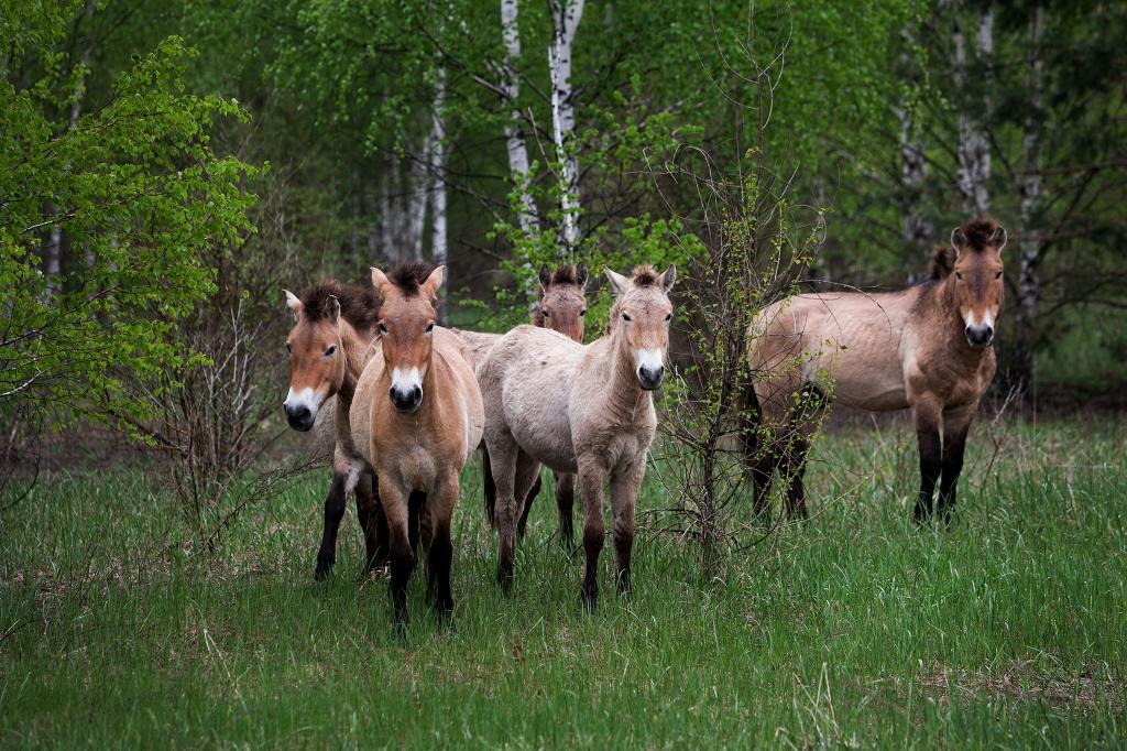 Мутанти чернобилских животиња
