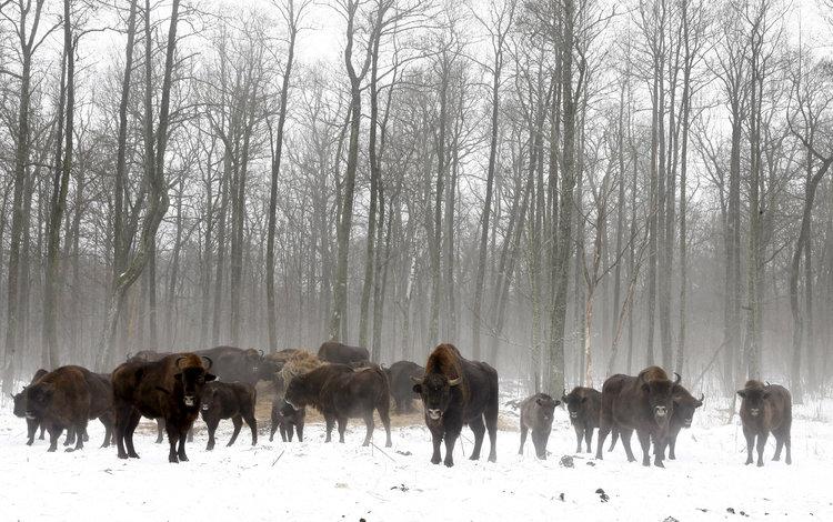 Животиње након Чернобила