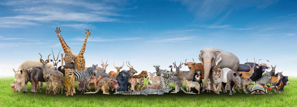 U toplim zemljama ima mnogo životinja
