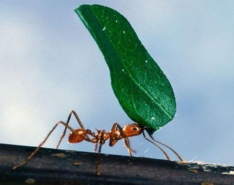 sestava mravljičnega alkohola