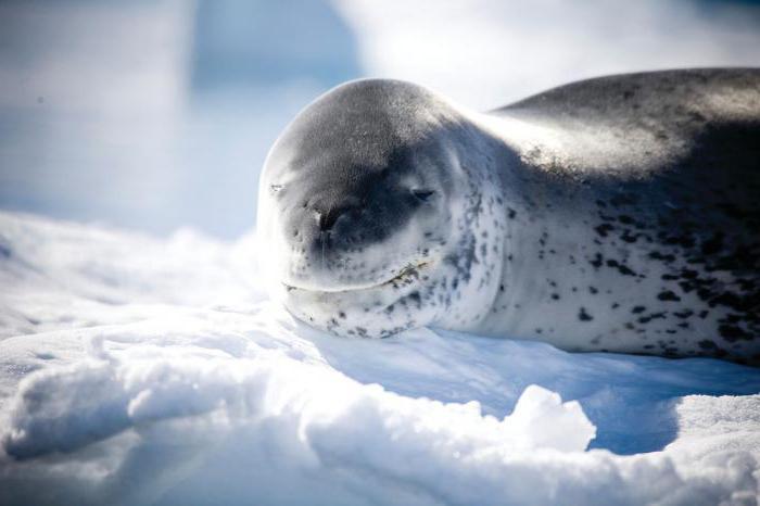 Clima del continente antartico