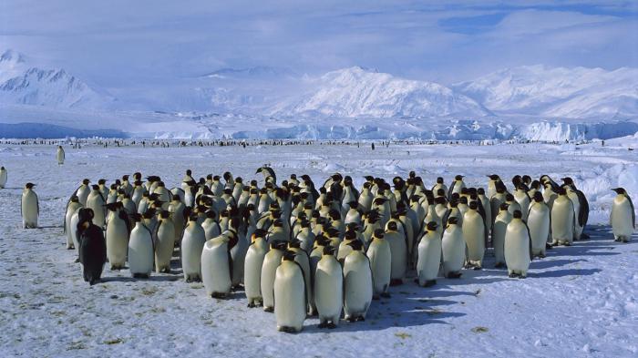 Antarktika je najhladniji kontinent