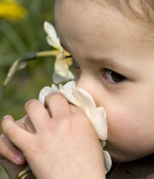 биљна алергија