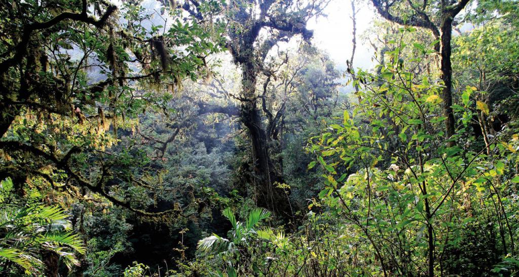 kiša šuma