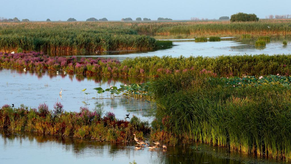 piante della riserva di Astrakhan