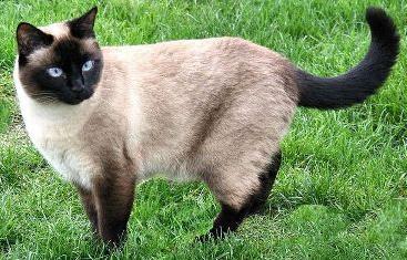 w jakim wieku można wysterylizować kota