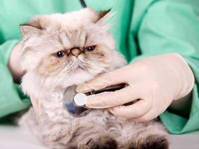 dove sterilizzare un gatto