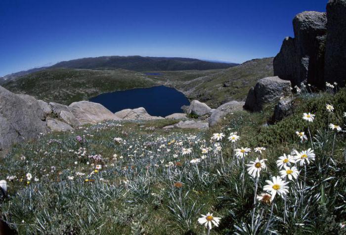 Góry Australii