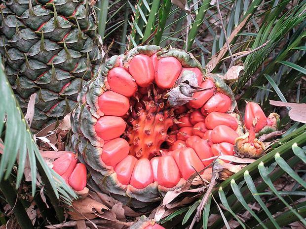 Australijskie zdjęcia roślin z imionami